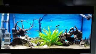 Juwel HeliaLux LED 1000 45W on Juwel Rio 180