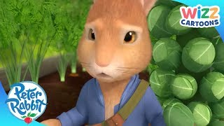 Peter Rabbit | Get Out of the Garden! | Action-Packed Adventures | Wizz Cartoons