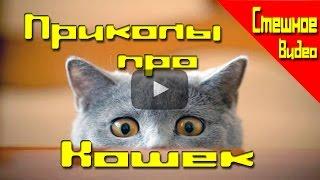 Приколы Смешное видео про кошек #1 до слез