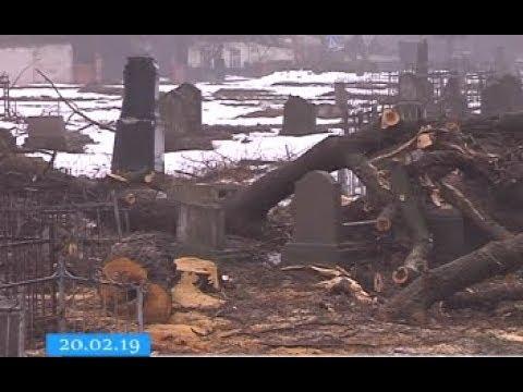 ТРК ВіККА: У Черкасах спилюванням дерев зруйнували пам'ятники на цвинтарі. Комунальники заперечують