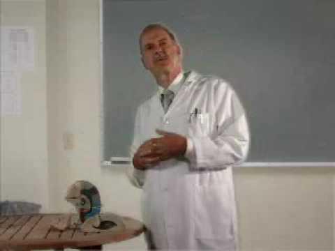 John Cleese - The Scientist