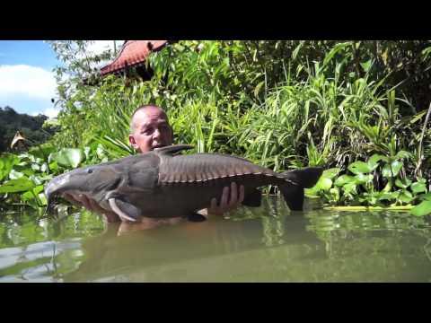 Ripsaw Catfish, Gillhams Fishing Resorts.