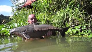 Ripsaw Catfish, Gillhams Fishing Resorts.