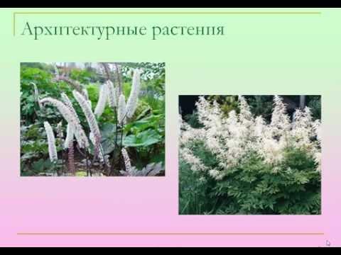 высокие растения в цветнике