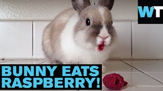 This Bunny Eating Raspberries Is So Adorable! | What's Trending Now