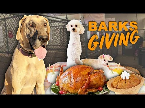 Shelter dogs first Thanksgivin...