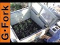 Growing Vegetables In Winter In Cold Frames - Updated Video - GardenFork