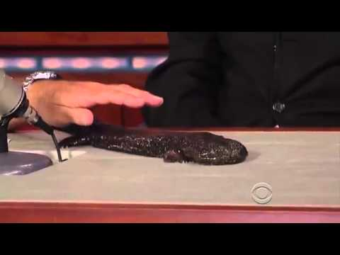 Jack Hanna and His Friends on David Letterman