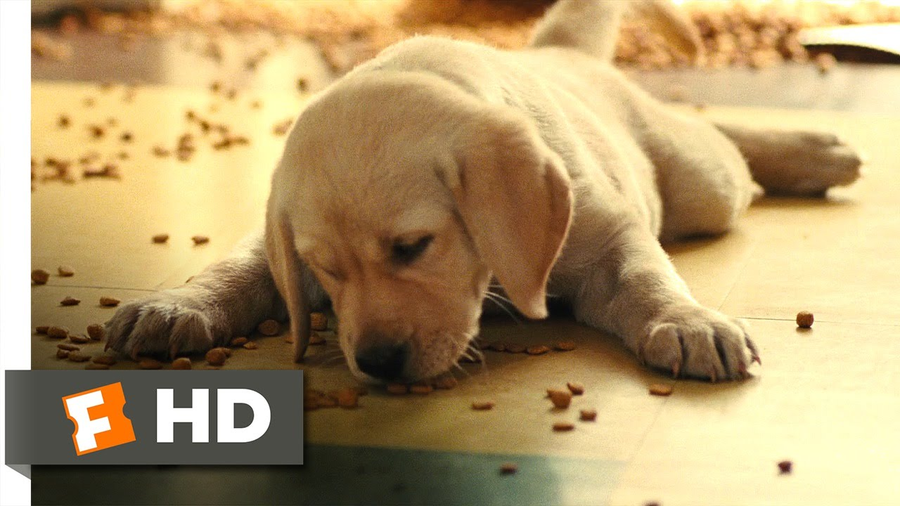marley and me Find great deals on ebay for marley and me and marley and me dvd shop with confidence.
