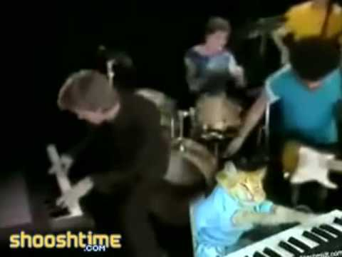 Youtube Keyboard Cat Hall Oates