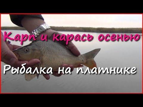 Fishing. Ловля карася и карпа в октябре