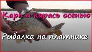 Рыбалка. Ловля карася и карпа в октябре(Видео о рыбалке на карпа и карася в октябре. Ловля карпа и карася осенью. Fishing for carp and crucian carp in October. Ловил..., 2014-10-12T02:57:42.000Z)