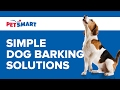 PetSmart Can Help: Simple Dog Barking Solutions