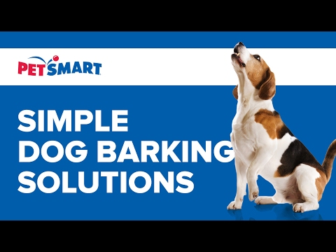 Stop Dog Barking with Dog Barking Solutions from PetSmart