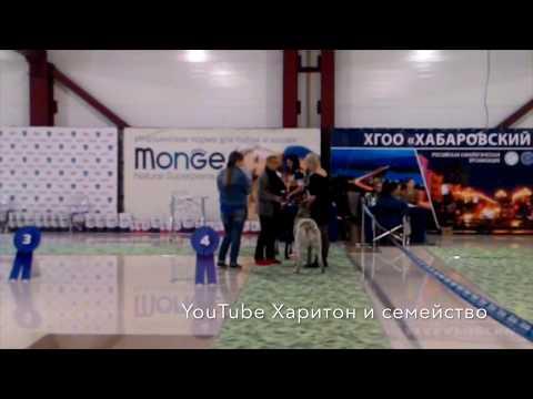 Выставка собак г.Хабаровск