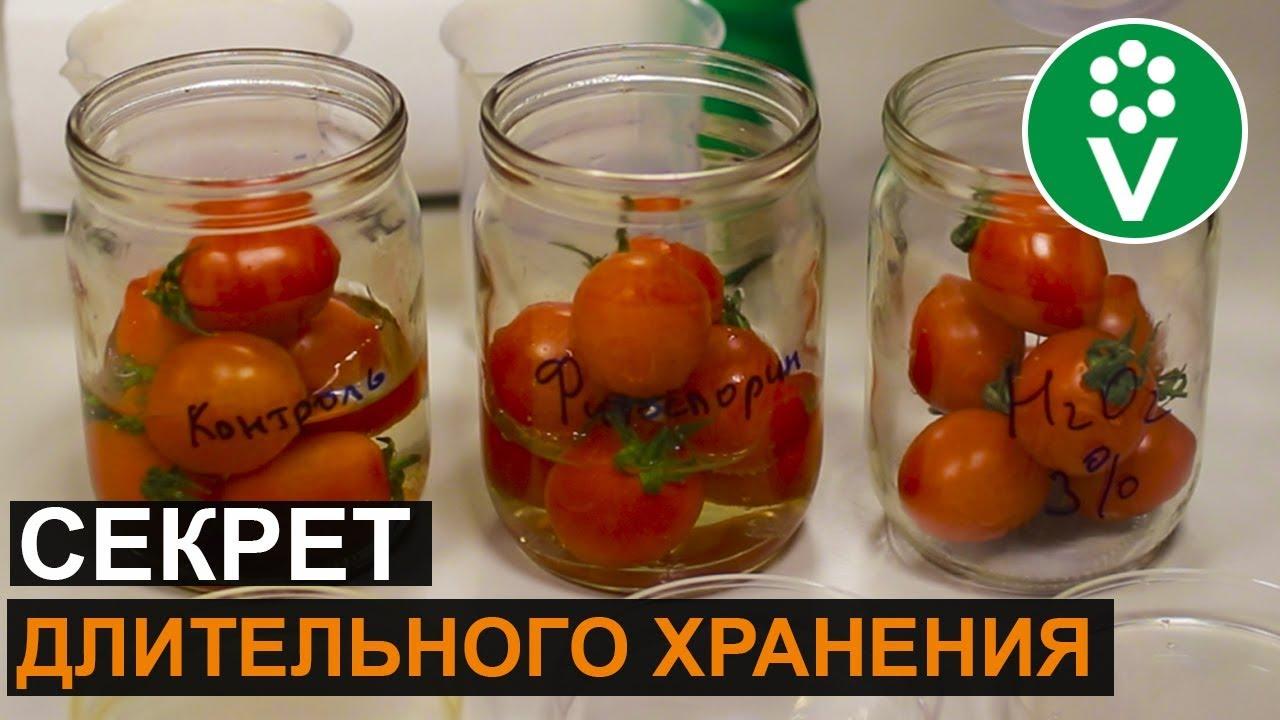 Как сохранить урожай свежих помидоров и огурцов до Нового года?