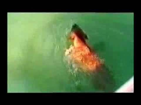 YouTube Dog Attack Shark - YouTube