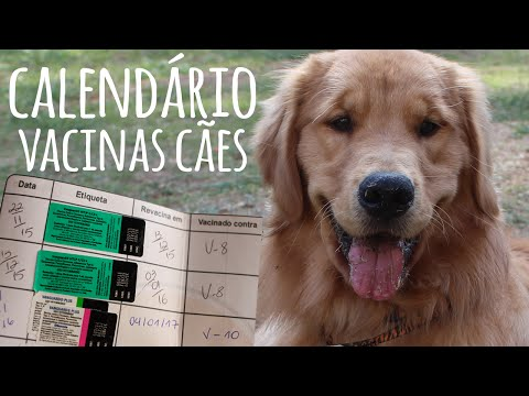 Calendário de vacina dos cães