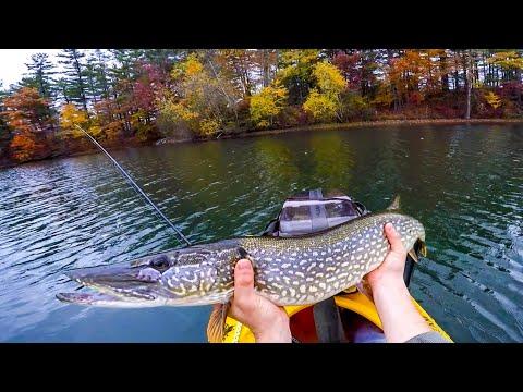 Big, Fat, Fall PIKE Fishing ( Upstate New York)
