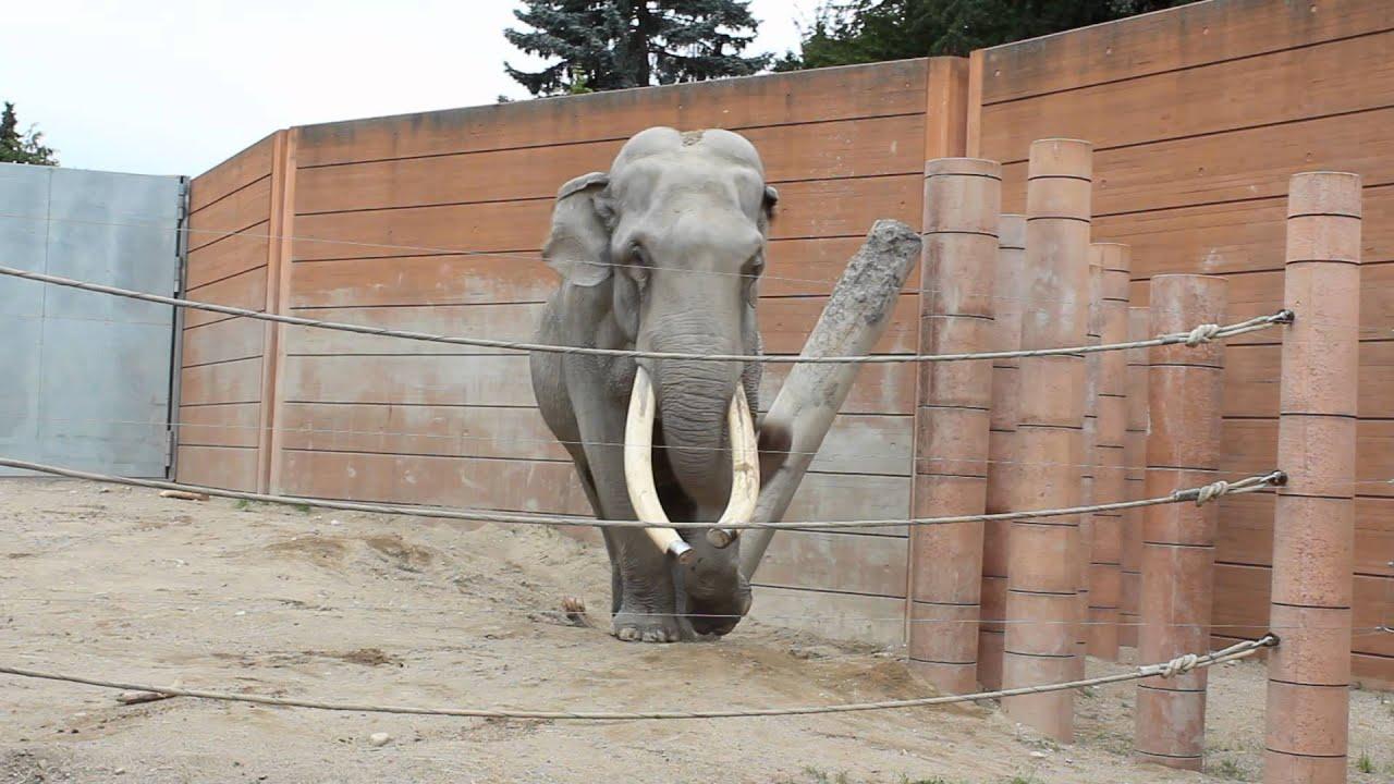 elefanten københavn
