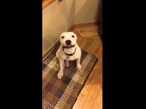DOG SAYS CHEESE
