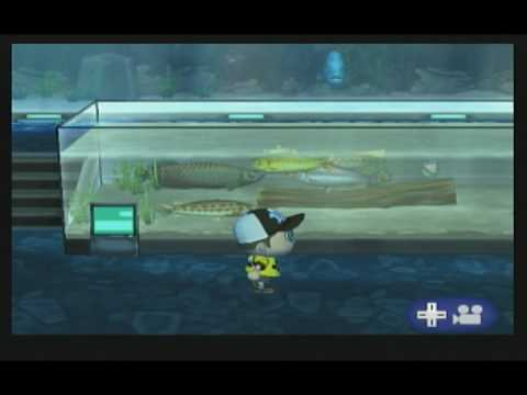 Animal Crossing City Folk - Completing The Fish Collection