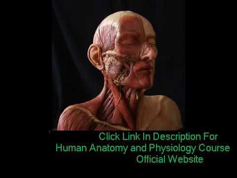 Human Anatomy & Physiology Study Course