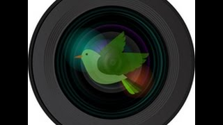 Allen BirdCam Live Stream thumbnail