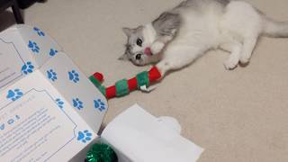 Unboxing with Fomo the cat! Munchkin Cat Giftbox Haul