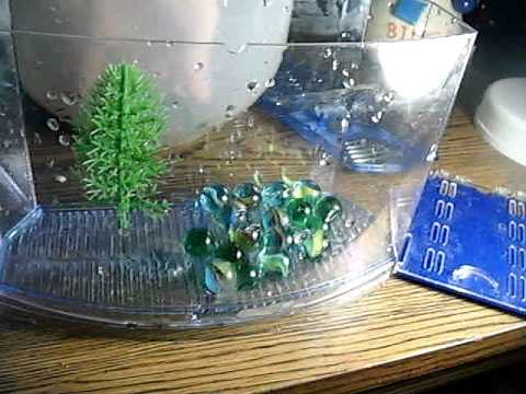 How to clean a betta fish tank youtube for Cleaning betta fish tank