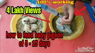 #pigeons #1| How to feed baby pigeons of 5 to 15 days | feeding baby pigeons | #babypigeon feeding