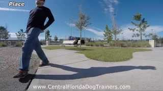 "Beagle/lab Mix ""nike"" Before And After Obedience Transformation. Dog Training In Central Florida"