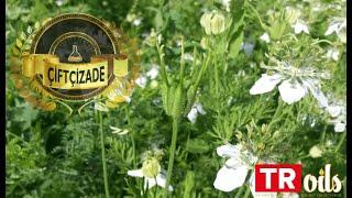 TROiLS Organik Çörekotu Yağı Üretimi - TROiLS Organic Black Cumin Seed Oil Production
