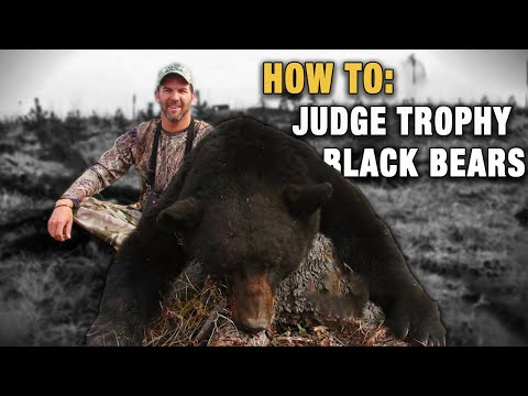 Identifying & Judging Trophy Black Bears - Hunting for Black