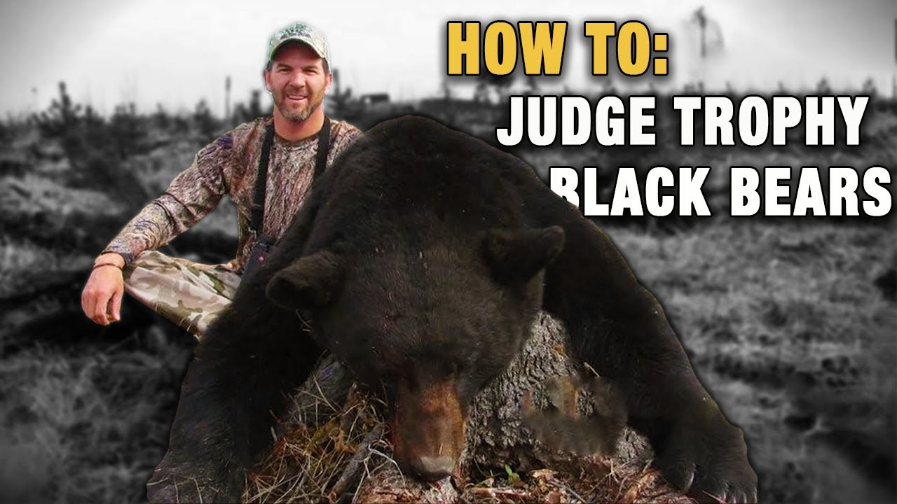 Identifying & Judging Trophy Black Bears - Hunting for Black Bear