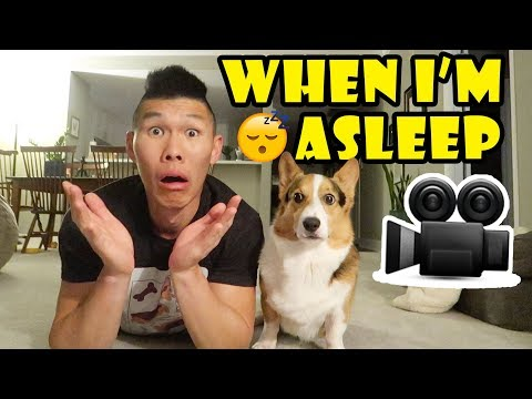 Didn't Know My Corgi Dog Is So Busy While I'm Asleep 😴|| Life After College: Ep. 636