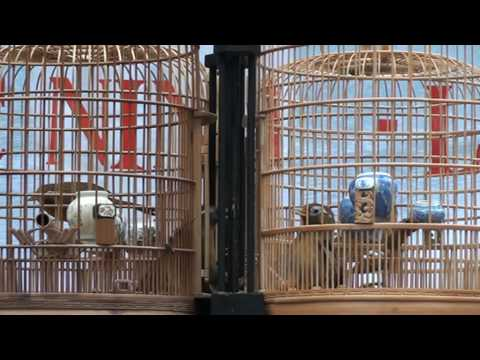 hoa mi chien1(lien tinh 10-1-2010).MPG