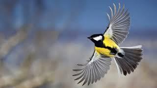 Почему птица бьется в окно несколько дней подряд народные приметы