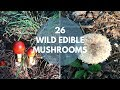 Wild Mushrooms You Can Eat