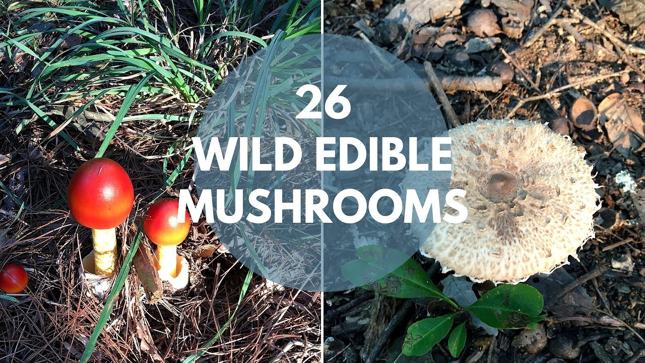 Wild Mushrooms You Can Eat - YouTube