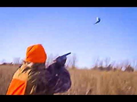 Amazing South Dakota Pheasant Hunting