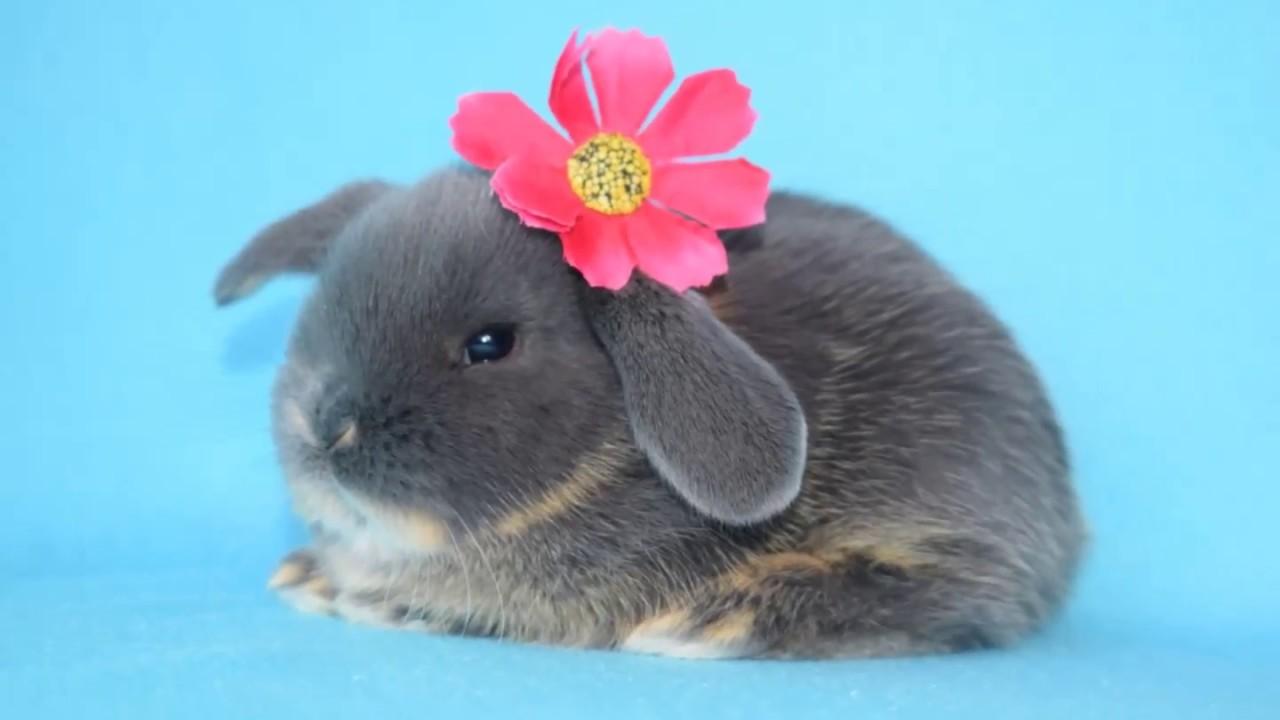 Содержание кроликов в хозяйстве А Салова - YouTube