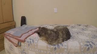 Kitty, lazer Dot? Lazer dot