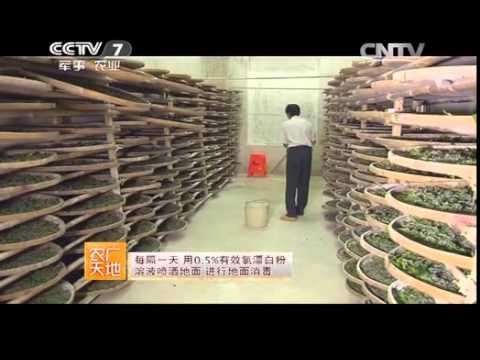 20141217 农广天地  桑蚕养殖