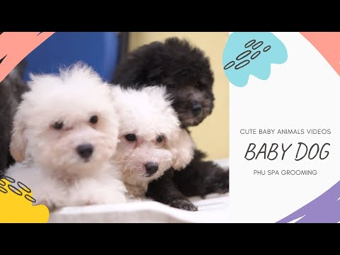 Baby Dogs - Cute and Funny Dog Videos Compilation