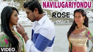 Download Hindi Video Songs - Navilugariyondu Video Song II Rose II Ajay Rao, Sharvya
