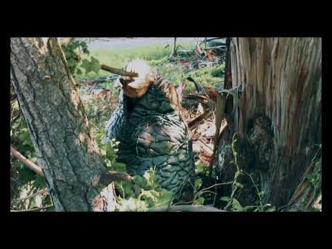 This Is Hatching Bigfoot Egg In Oregon Forest. Yeti & Sasquatch Not Mammals But Alien Species!