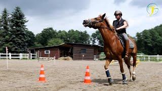 Ponywallach beisst sich fest und galoppiert seinem Reiter davon - Fall Balou Teil 2/2