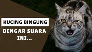 Kucing Bingung Dengar Suara Ini