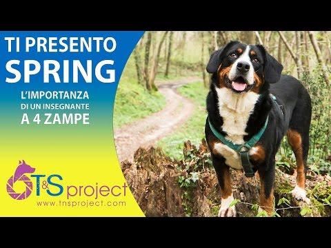 Ti presento la Spring - L'Importanza di un Insegnante a 4 Zampe
